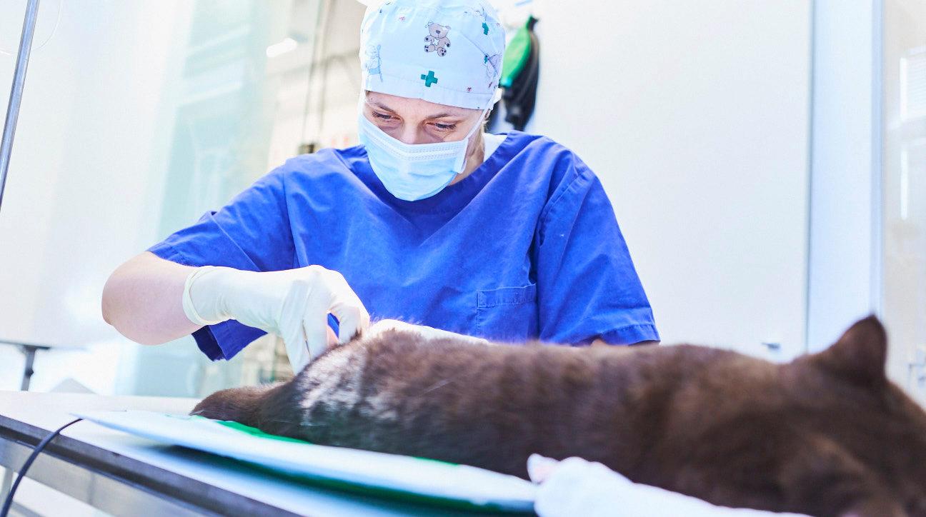 VetStage GmbH Teamscout - Tierärzte (m/w/d) für die KleintierKlinik Hannover gesucht!