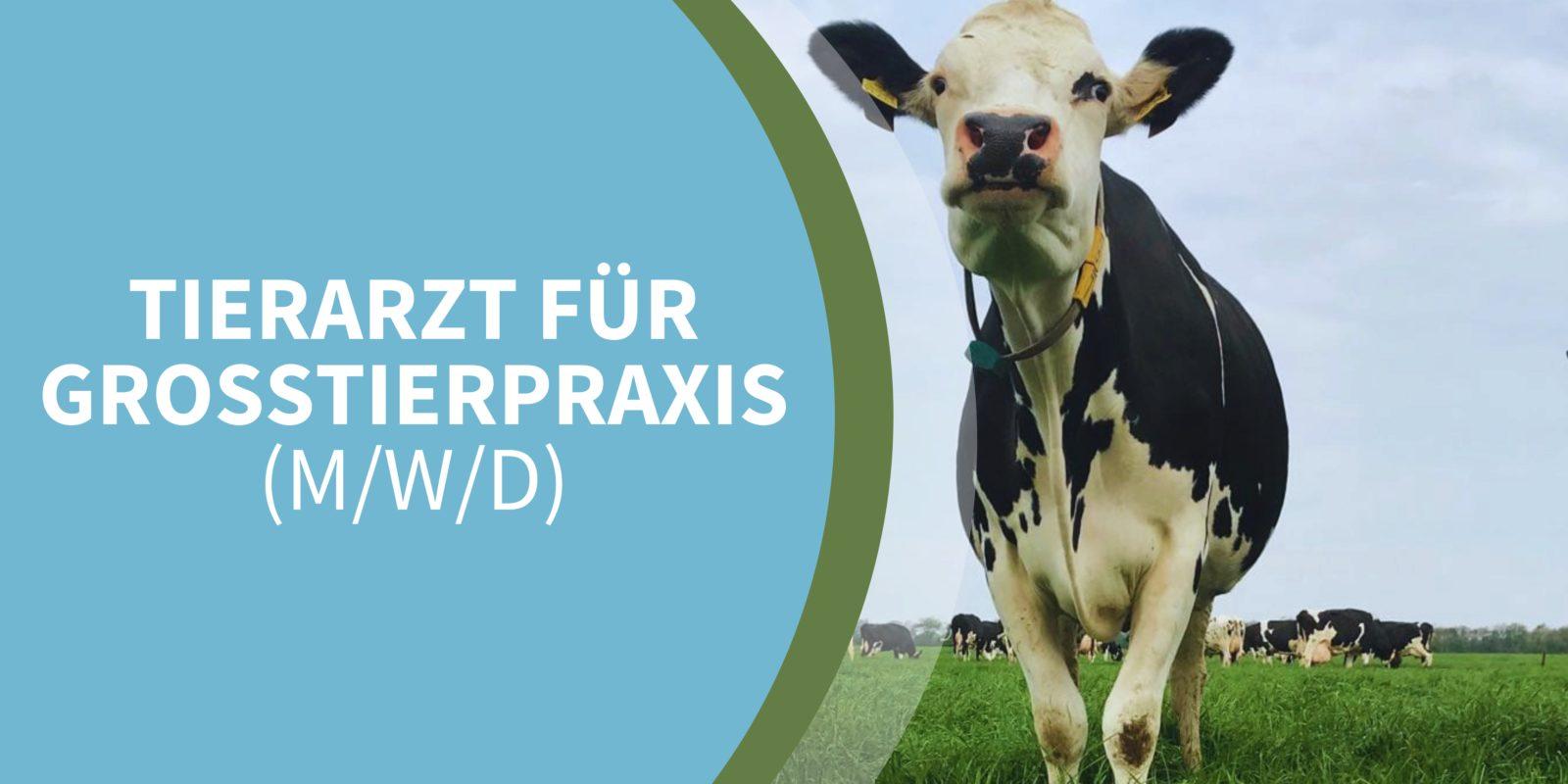 Tierarztpraxis Koch - Großtierpraktiker (m/w/d) in Oldersum, Ostfriesland, Niedersachsen