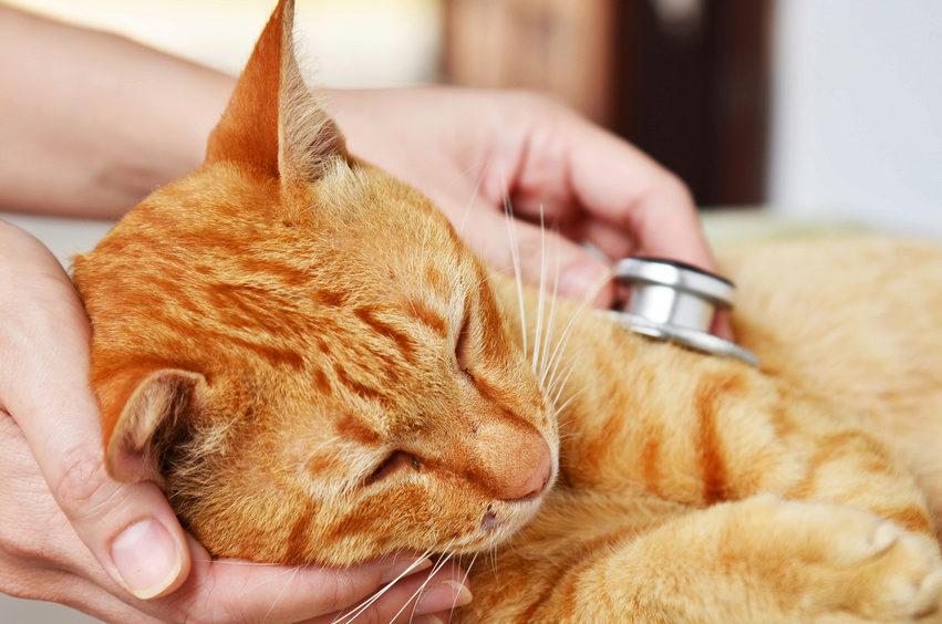 Tierklinik Ismaning GbR - Doktorand*in (m/w/d) bzw. Tierärzt*in (m/w/d) in Anerkennungszeit