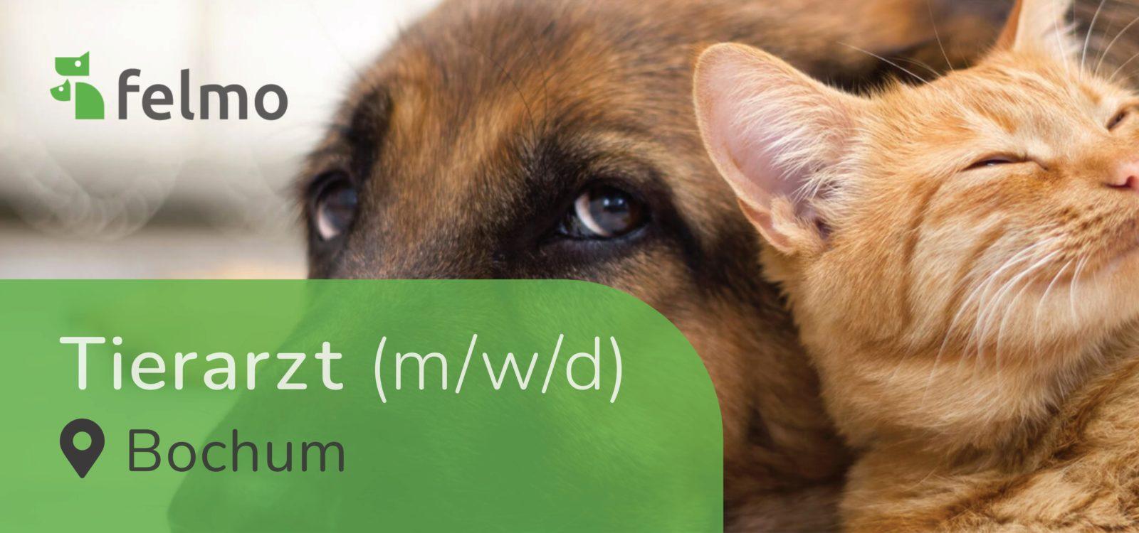 felmo GmbH - Tierärztin/Tierarzt (m/w/d) in Bochum gesucht