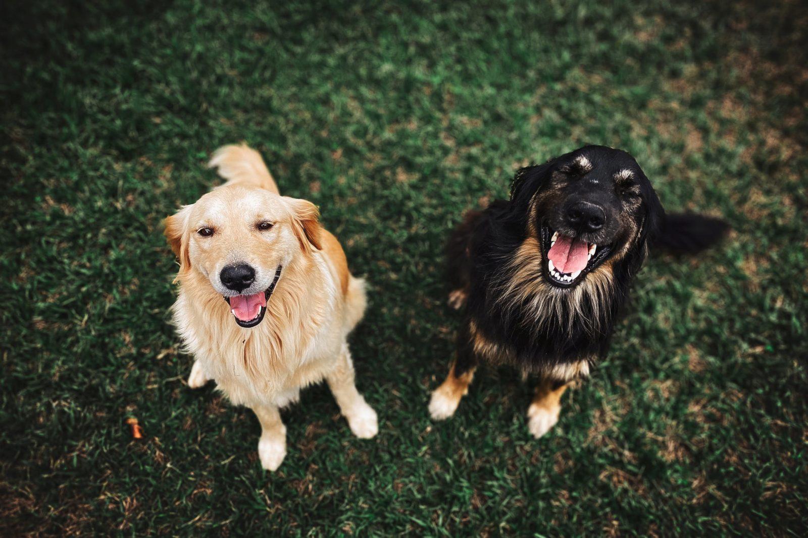 FirstVet - FirstVet is looking for veterinarians in Germany (m/w/d)