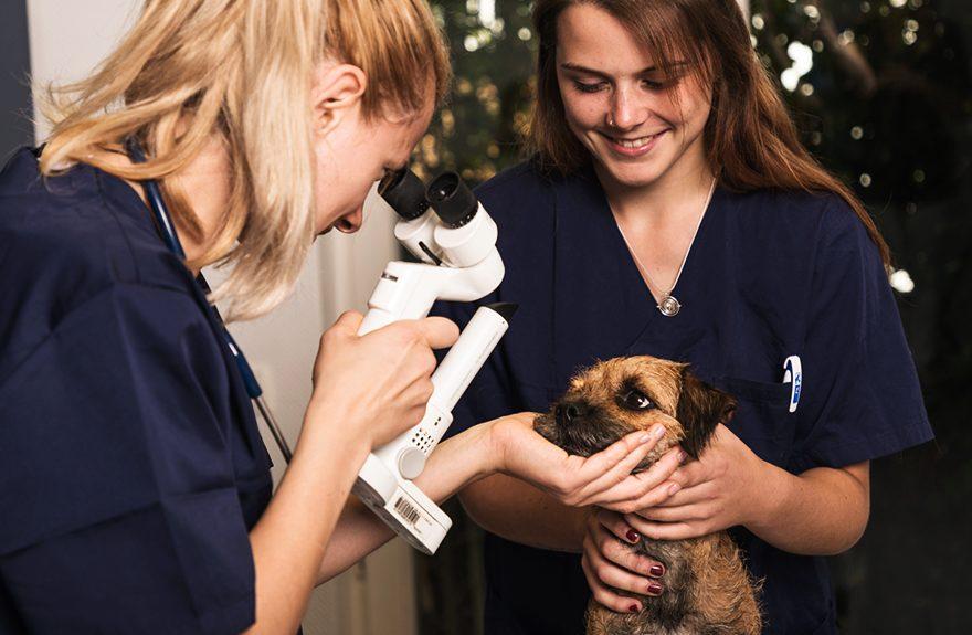 Tierarzt Plus Partner - Praktikum für veterinärmedizinische Studenten (m/w/d) aus Deutschland / Österreich / Schweiz