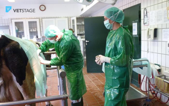 Als Tiermedizinstudent Ins Ausland – Teil 2: Auslandspraktikum