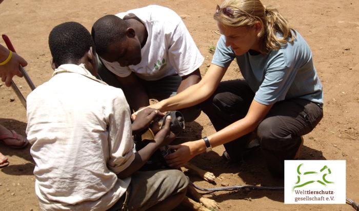 Tierärzte Im Beruf – Projektkoordinatorin Für Die Welttierschutzgesellschaft