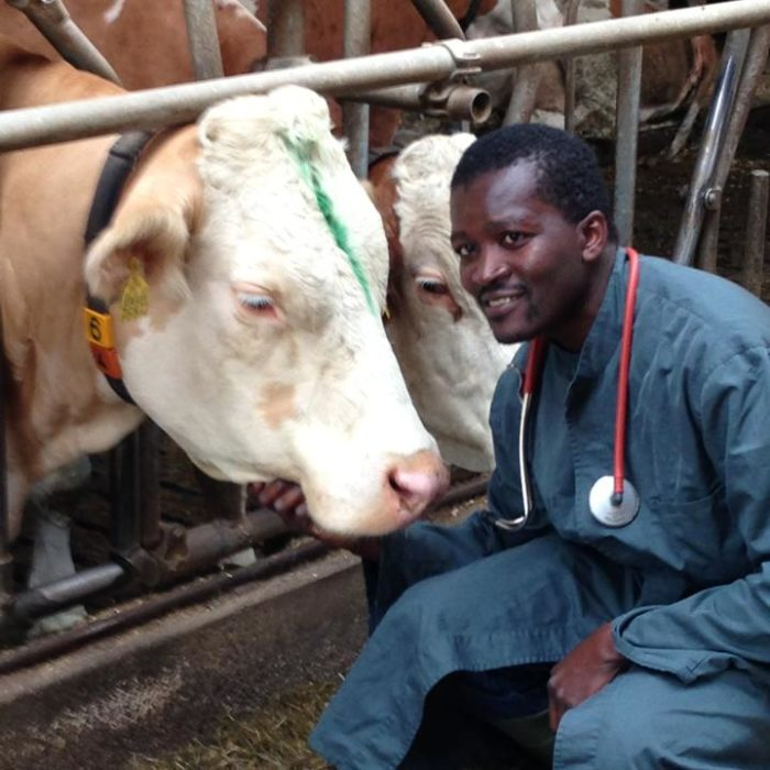 Interview With A Bavarian Bovine Practitioner With African Roots
