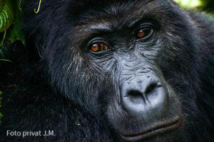 Gorillabericht_JM3