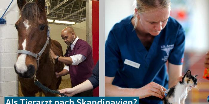 KarriereSkandinavien