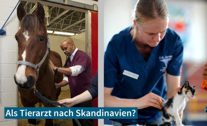 Als Tierarzt Nach Skandinavien: Chancen Und Tipps Für Eine Erfolgreiche Planung