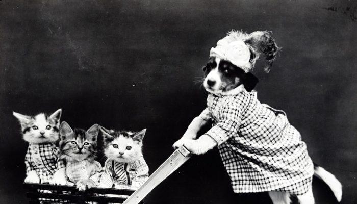 Tiermedizin Studieren Mit Kind? Klar! – Besser Nicht! – Oder Vielleicht Doch?…