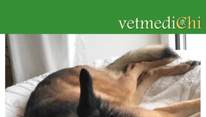 Tierärzte Im Beruf – Selbständige Tierärztin Für Chiropraktik Und Akupunktur