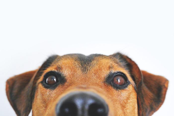 Mein Weg Als Tierärztin Und Mutter – Selbstständig Mit Tierverhaltenstherapie