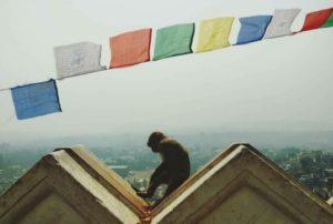 Tiermedizin weltweit- zu Gast im bunten Nepal