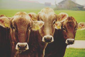 Ein Tarifvertrag für die Tiermedizin- Lösung der Probleme zwischen Arbeitgebern und Arbeitnehmern?