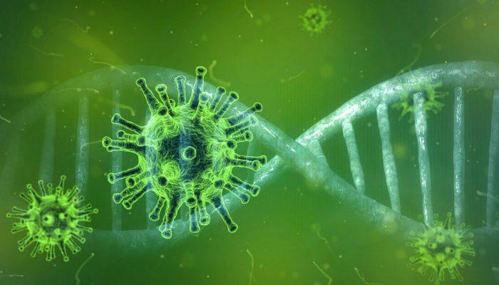 Coronaviren Und Andere Zoonosen – Eine Unterschätzte Gefahr?