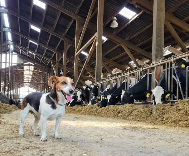 Tierarztpraxis Koch - unsere Vision