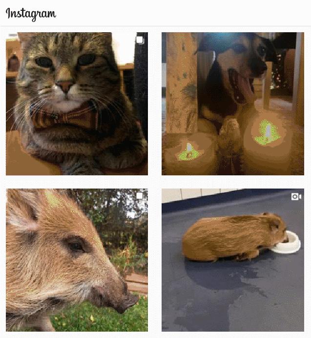 Tierarztpraxis Rödiger bei Instagram