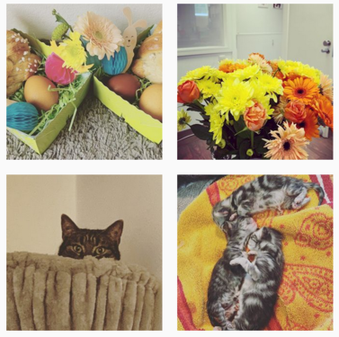 Tierklinik Germering bei Instagram