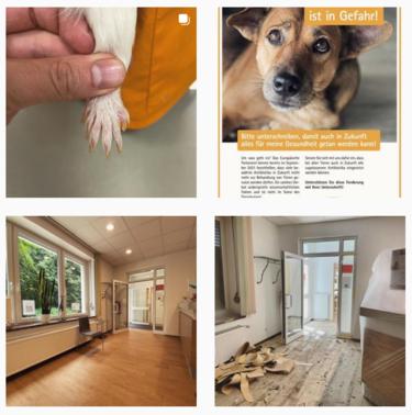 Tierärztliche Praxis am Dorney bei Instagram