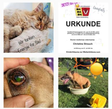 Tierarztpraxis Fuchsloch bei Instagram