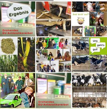 Kuhkraft – gute, gesunde Kühe bei Instagram
