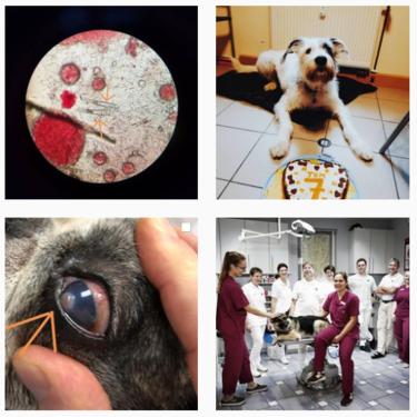 Kleintierpraxis Dr. Ostermann bei Instagram