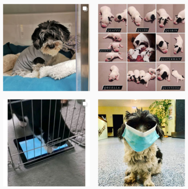 AniCura Tierklinik Egelsbach GmbH bei Instagram