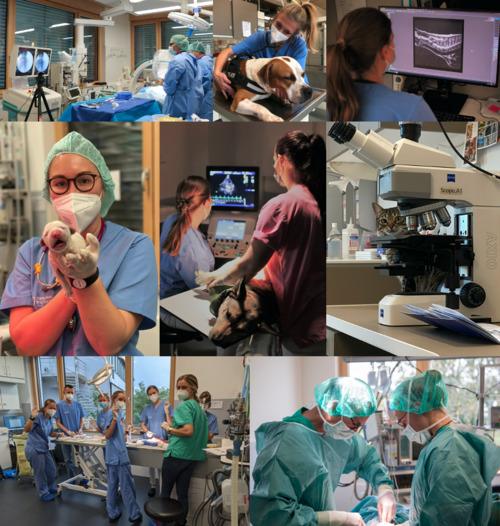 Tierklinik Stuttgart-Plieningen - unsere Vision