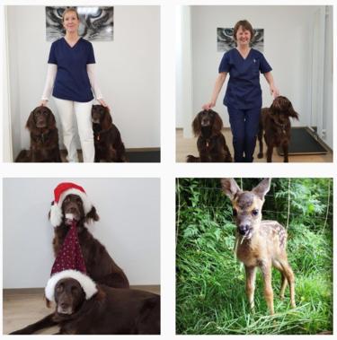 Kleintierpraxis am Rankbach bei Instagram