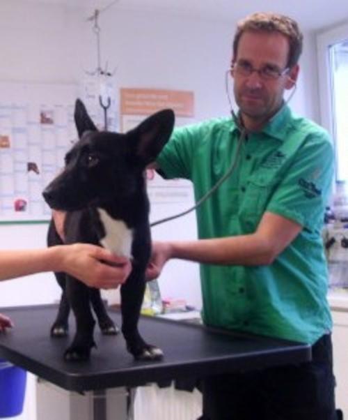 Tierarztpraxis Schwarz München - unsere Vision